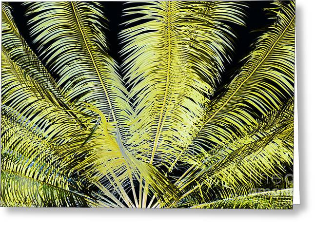 Special Occasion Greeting Cards - Night Palm Greeting Card by Roselynne Broussard