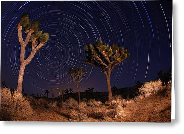 Tree Lines Pyrography Greeting Cards - Night Shot of Star Trails in Joshua Tree National Park in Califo Greeting Card by Katrina Brown