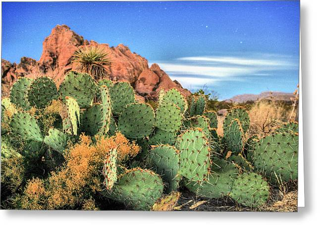 Desert Southwest Greeting Cards - Night Skies Greeting Card by JC Findley