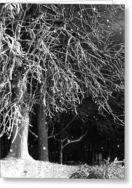 Snow-covered Landscape Digital Greeting Cards - Night Snow Greeting Card by Gothicolors Donna Snyder