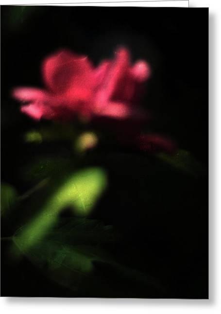 Magenta Fuchsia Greeting Cards - Night Vision Greeting Card by Rebecca Sherman