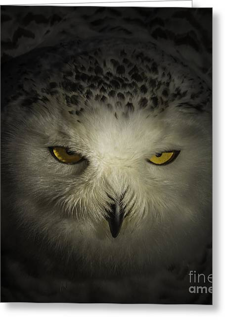 Snowy Night Night Greeting Cards - Night Watch Greeting Card by Mitch Shindelbower