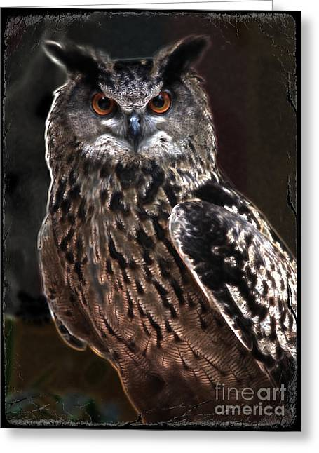 Unique Owl Greeting Cards - Night Watchman Greeting Card by Carol Groenen