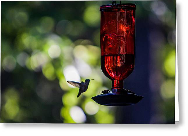 Hummer Greeting Cards - Nightcap Greeting Card by Aaron Aldrich