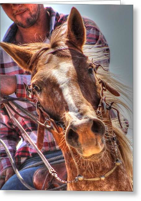 Roping Horse Greeting Cards - Nightmare Greeting Card by Vikki Correll