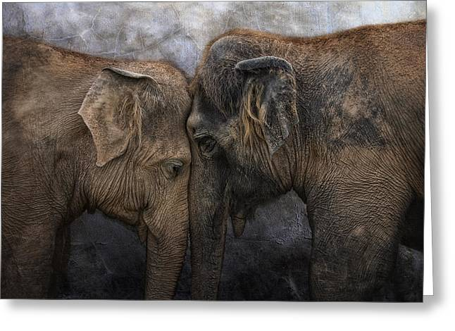 Animal Photographs Greeting Cards - Nighty Night Darling Greeting Card by Joachim G Pinkawa