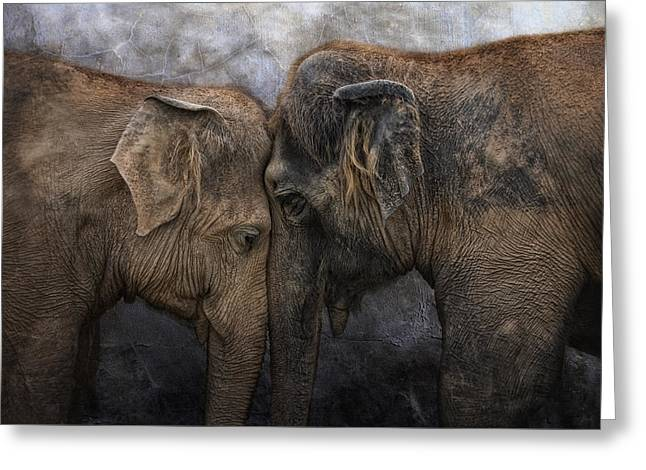 Animal Greeting Cards - Nighty Night Darling Greeting Card by Joachim G Pinkawa