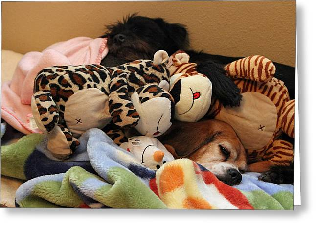 Toy Dog Greeting Cards - Nighty Night Girls Greeting Card by Brenda Donko