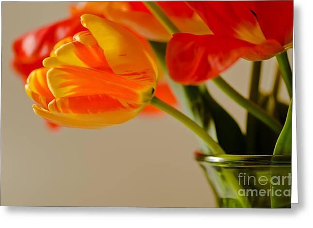 Water Jars Greeting Cards - Nikon Nicks Tulip Composition Greeting Card by Nick  Boren