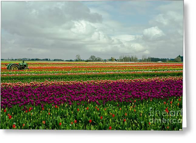 Torism Greeting Cards - Nikon Nicks Tulip Landscape Greeting Card by Nick  Boren