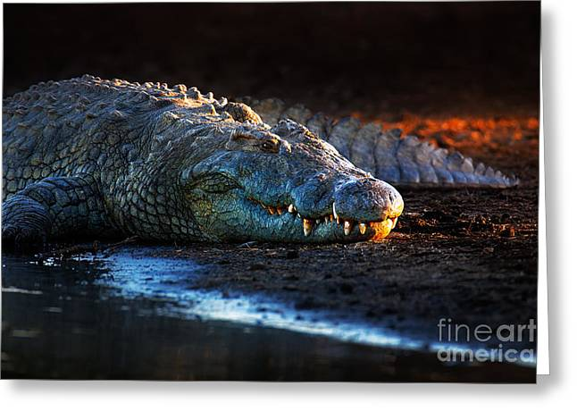 Carnivore Greeting Cards - Nile crocodile on riverbank-1 Greeting Card by Johan Swanepoel