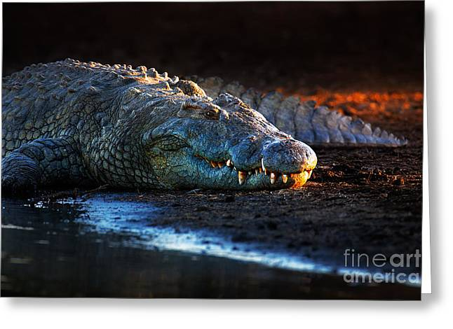 Powerful Greeting Cards - Nile crocodile on riverbank-1 Greeting Card by Johan Swanepoel