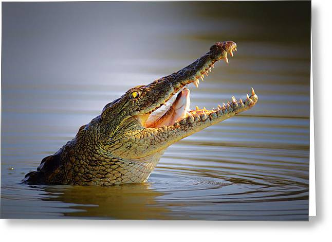 Nile Greeting Cards - Nile crocodile swollowing fish Greeting Card by Johan Swanepoel