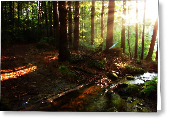 Union Connecticut Greeting Cards - Nipmuck Woods Greeting Card by Rachael McGrath
