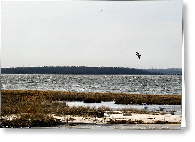 Hurricane Sandy Photographs Greeting Cards - NJ Shore Greeting Card by Michelle Milano
