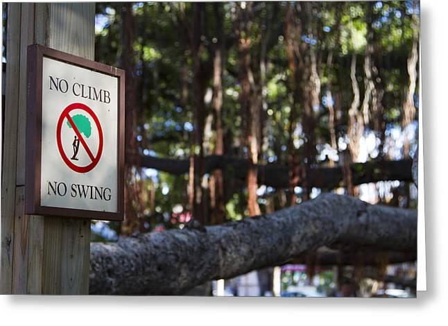 Lahaina Greeting Cards - No Climb No Swing Greeting Card by Jessica Velasco
