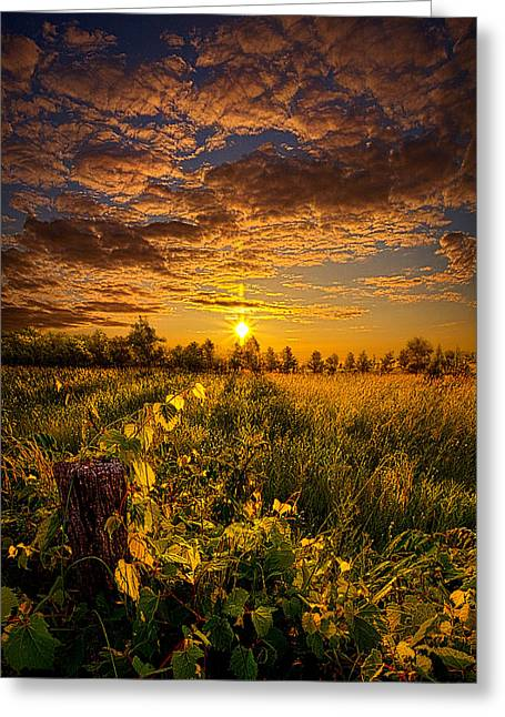 Shadows Greeting Cards - No Hurry Greeting Card by Phil Koch