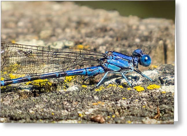 Alga Greeting Cards - Blue-eyed Darner Dragonfly on Stump Greeting Card by Patti Deters