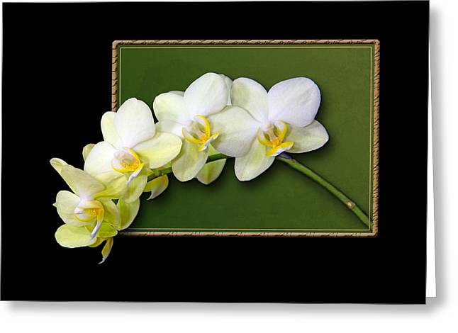 Botanical Greeting Cards - Pale Yellow Orchid Frame Greeting Card by Patti Deters