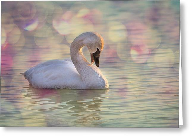 Swans... Greeting Cards - Shy Swan Greeting Card by Patti Deters