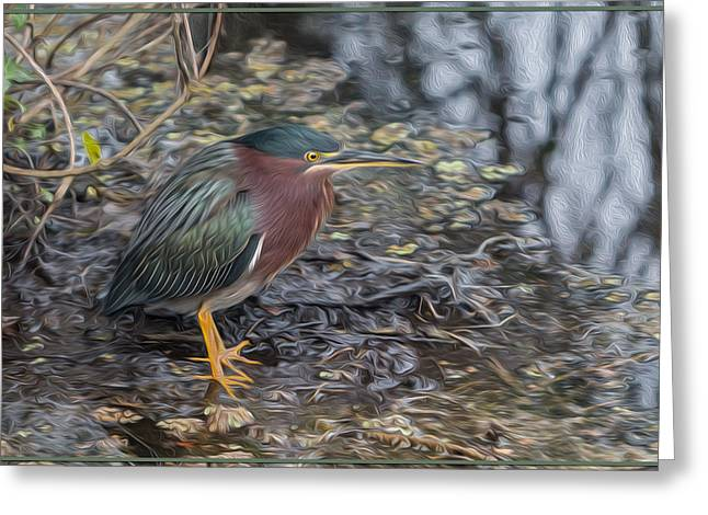 Hunting Bird Greeting Cards - Green Heron Patience Greeting Card by Patti Deters