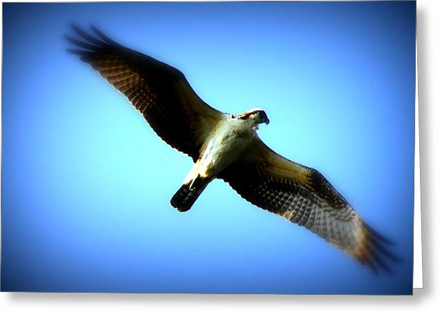 Soaring Falcon Greeting Cards - No Limits Greeting Card by Aurelio Zucco
