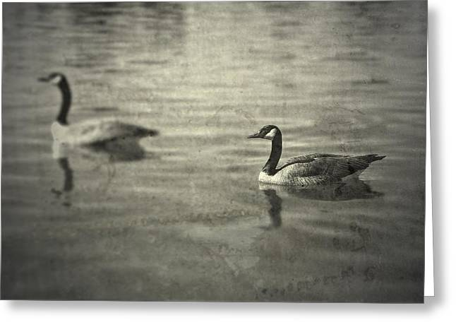 Geese Greeting Cards - No Matter What Greeting Card by Mark Ross