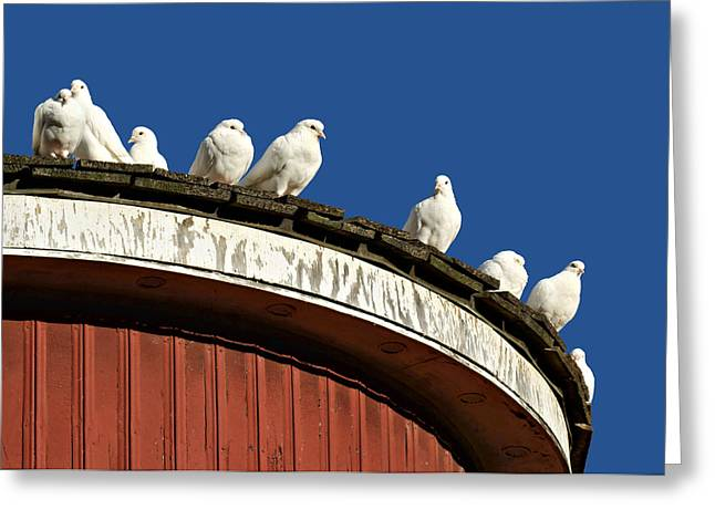 Dovecote Greeting Cards - No Place Like Home Greeting Card by Nikolyn McDonald