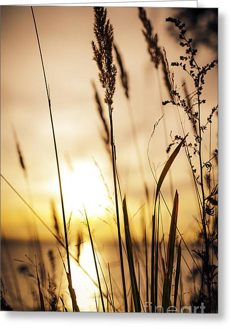Sweden Greeting Cards - No shades needed Greeting Card by Happy Melvin