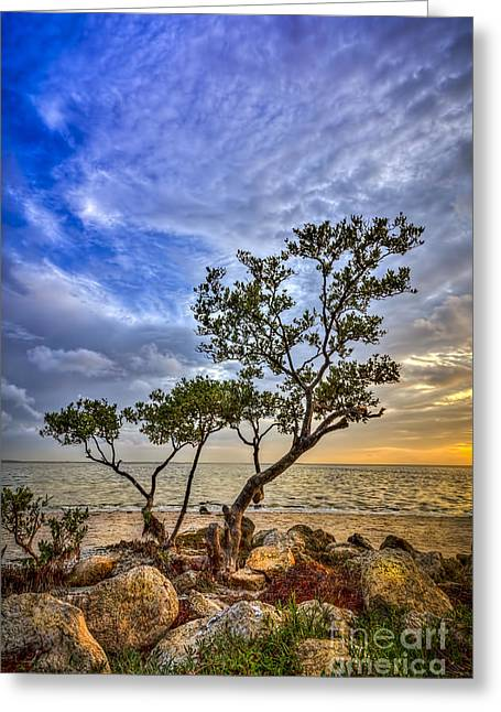 Mangrove Trees Greeting Cards - No Stress Today Greeting Card by Marvin Spates