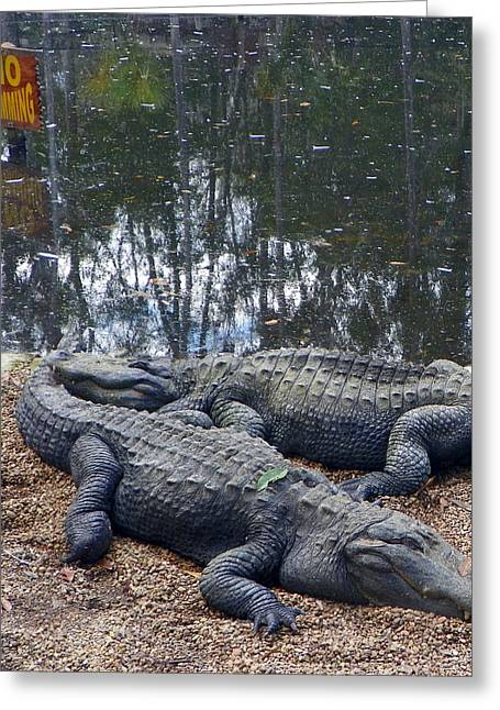 Florida Gators Digital Greeting Cards - No Swimming Greeting Card by Sheri McLeroy