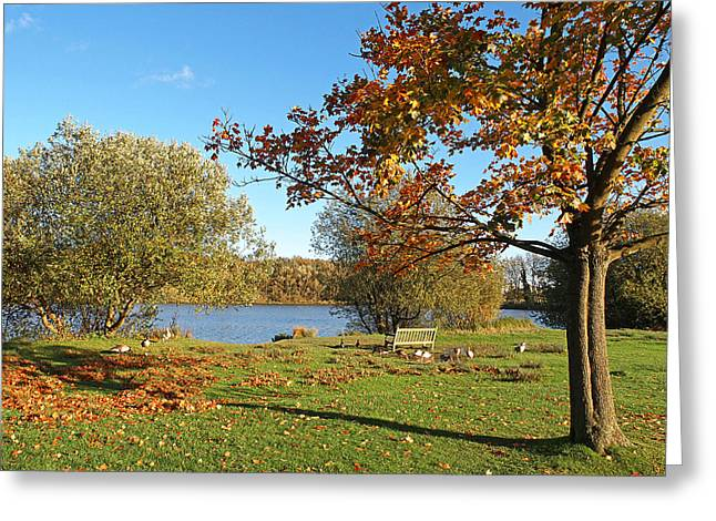 Empty Park Bench Greeting Cards - No Visitors at the Lake Today Greeting Card by Gill Billington