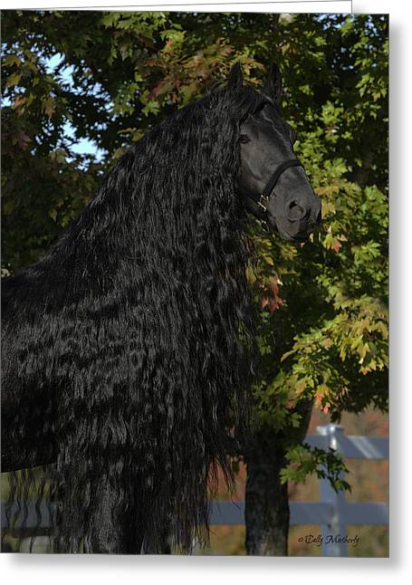 Equestrian Prints Photographs Greeting Cards - Nobility Greeting Card by Pinnacle Friesians