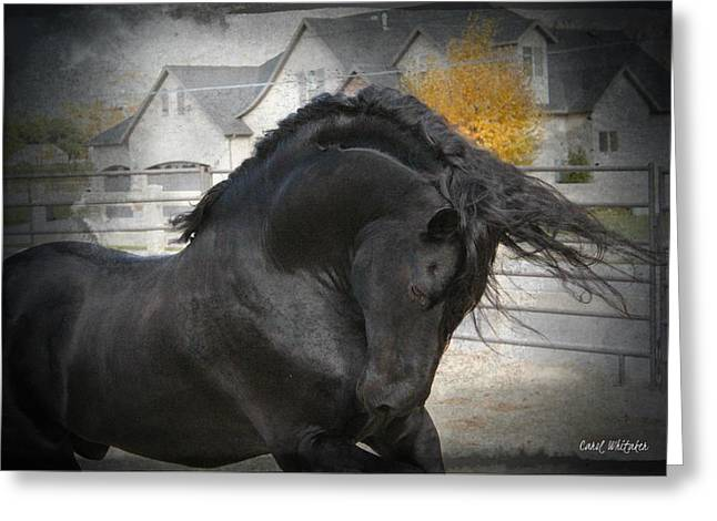 Best Sellers -  - Owner Digital Art Greeting Cards - Nobility Greeting Card by Royal Grove Fine Art