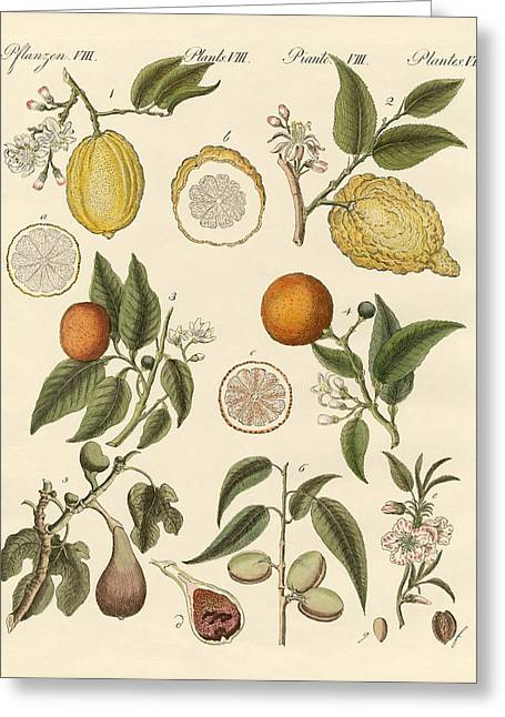 Noble Tropical Fruits Greeting Card by Splendid Art Prints