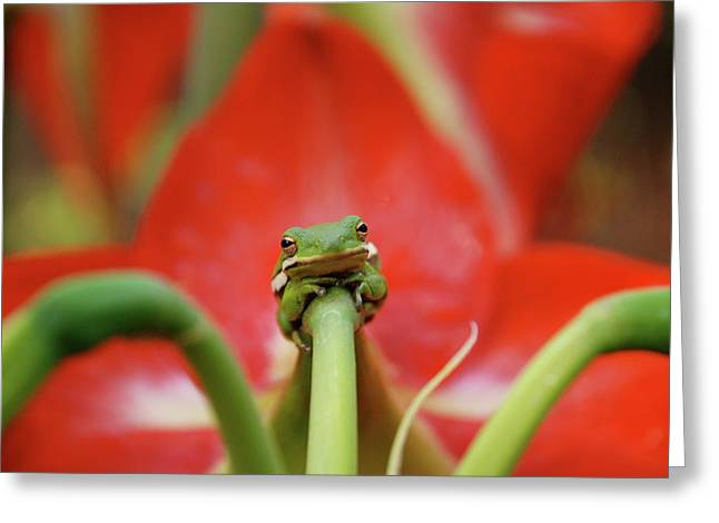 Print Photographs Greeting Cards - Nobodys Prince Greeting Card by Kathy Gibbons