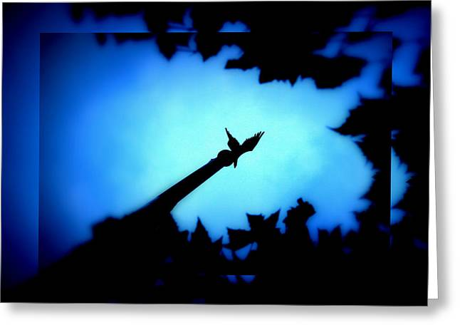 Within A Tree Greeting Cards - Nocturne Greeting Card by Aurelio Zucco