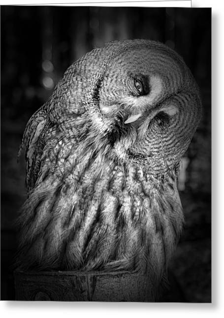 Lovely Owl Greeting Cards - Nodding Off Greeting Card by Mountain Dreams