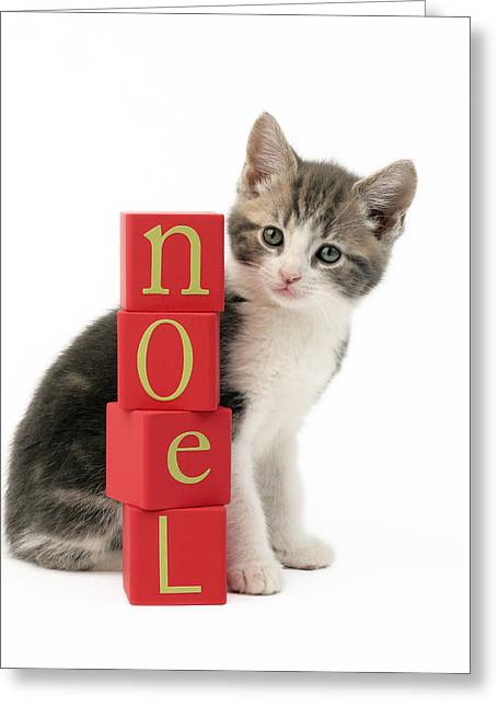 Eve Greeting Cards - Noel Kitten Greeting Card by Greg Cuddiford