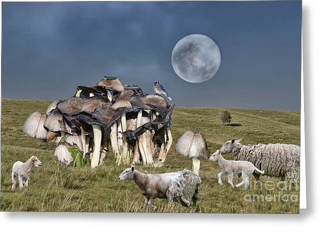 Dream Scape Greeting Cards - Nontana Landscape Greeting Card by David Arment