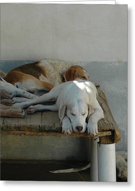 Foxhound Greeting Cards - Noontime Nap Greeting Card by Nancy Milburn Kleck