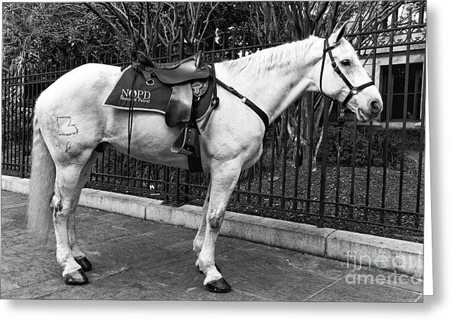 Nopd Horse Mono Greeting Card by John Rizzuto