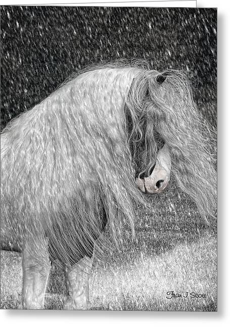 Gypsy Greeting Cards - Nor easter Greeting Card by Fran J Scott