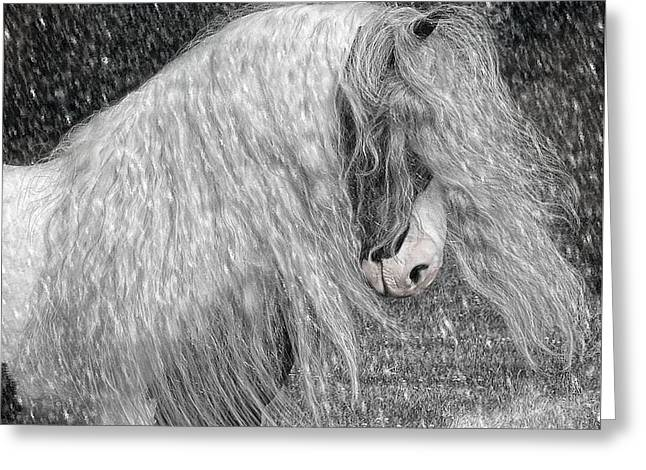 Nor easter Greeting Card by Fran J Scott
