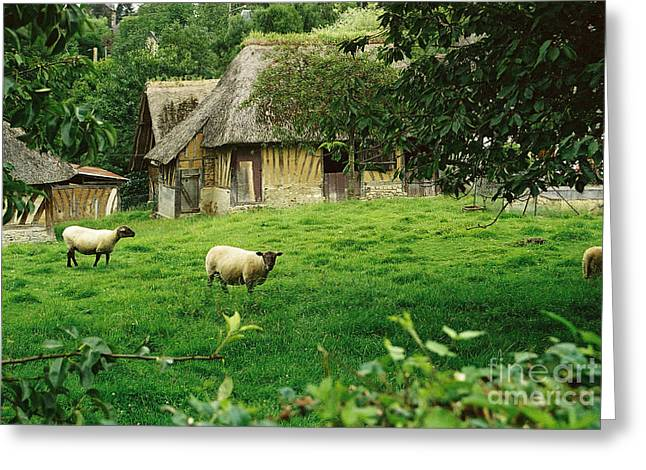 Thatch Greeting Cards - Normandy Countryside Greeting Card by Holly C. Freeman