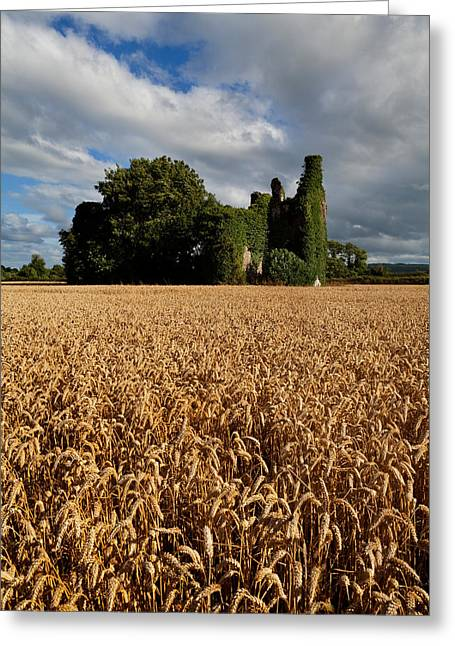 Overgrown Greeting Cards - Norrisland Castle, County Waterford Greeting Card by Panoramic Images