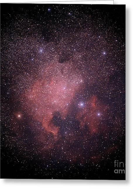 Deneb Greeting Cards - North American And Pelican Nebulas Greeting Card by John Chumack