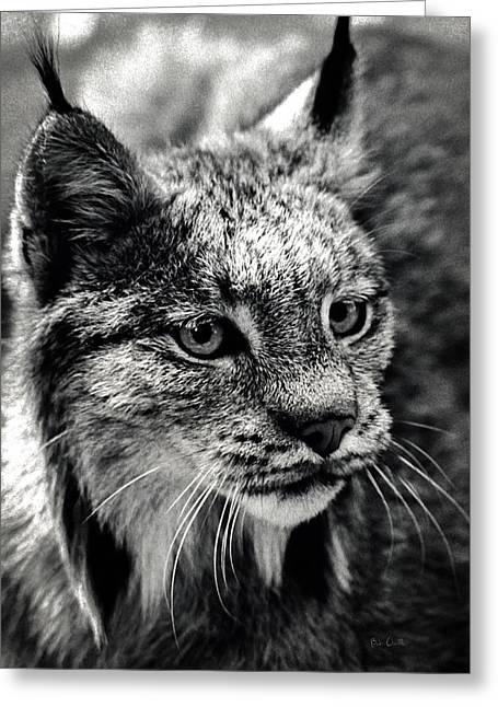 Best Sellers -  - Bobcats Photographs Greeting Cards - North American Lynx In The Wild. Greeting Card by Bob Orsillo