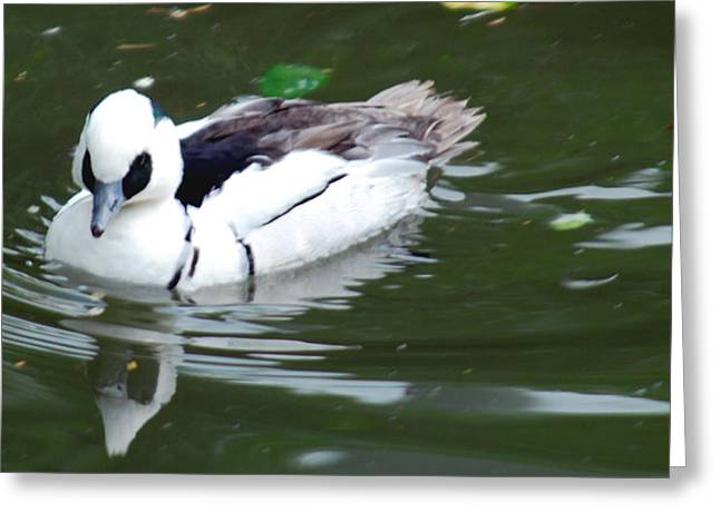 Water Fowl Mixed Media Greeting Cards - North American Male Smew Greeting Card by Optical Playground By MP Ray
