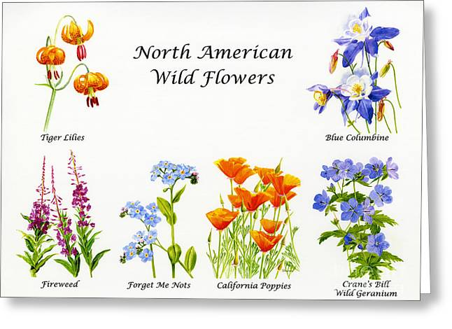 Watercolor Tiger Greeting Cards - North American Wild Flowers Poster Print Greeting Card by Sharon Freeman